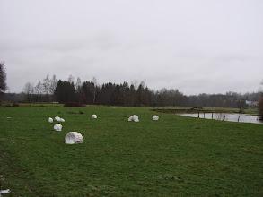 Photo: c'est des boules de neige