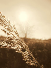 Photo: Sepia photo of a stalk of wheat against the sunlight at Carriage Hill Metropark in Dayton, Ohio.