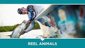 Reel Animals thumbnail