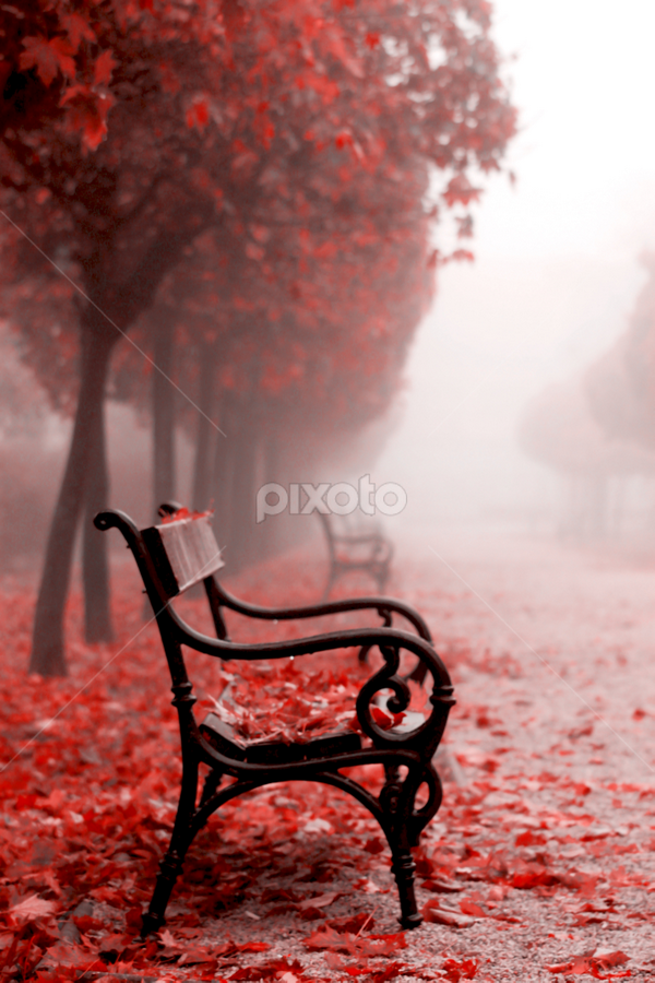 autumn 2018 by Sanja Dedić - City,  Street & Park  City Parks ( croatia, color, city park, autumn, park,  )