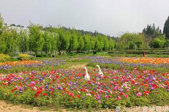 Photo: 拍攝地點: 梅峰-一平台 拍攝日期: 2014_04_16_FY