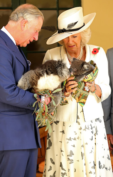 Photo: The Prince of Wales and the Duchess of Cornwall hold Koalas at Government House in, Adelaide, Australia. PRESS ASSOCIATION Photo. Picture date Wednesday November 7, 2012. See PA Story ROYAL Jubilee. Photo credit should read Chris Radburn/PA