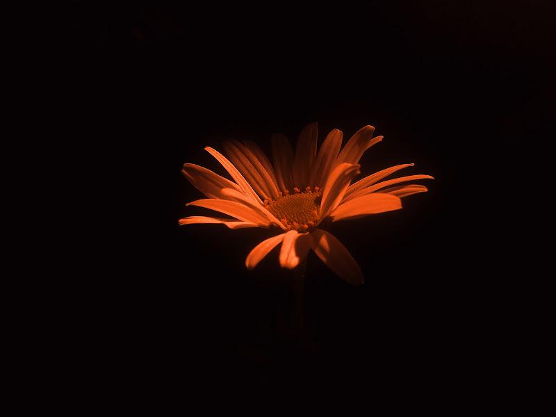 Orange flower di -Os-