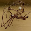 Vibrating spider kills net casting spider