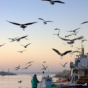 Harbor at sunset by Chrismari Van Der Westhuizen - Transportation Boats ( harbor, south africa, fishing, boat, fishing boat, westcoast )