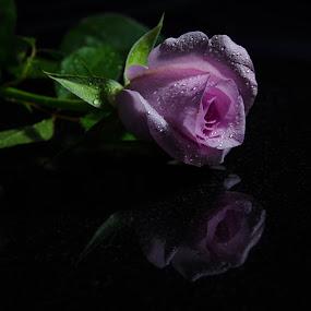 by Jo Darlington - Flowers Single Flower