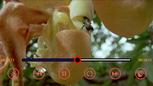 MP4 3GP AVI HD Video Player
