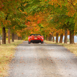 Sports car on tree lane by Craig Lybbert - Transportation Automobiles ( country, autumn colors, country driveway, red, cars, driveway, gravel road, car, maple leaves, road, maple, autumn leaves, autumn, sports car,  )