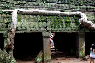 Photo: Year 2 Day 44 -   Roots of Silk Cotton Tree, Hugging the Wall in Ta Prohm #2