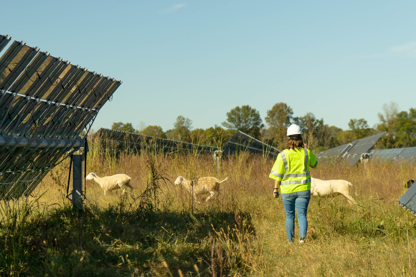 Clearloop seeing solar and regenerative energy in action climate action 2021