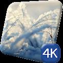 Macro Winter 4K Live Wallpaper icon