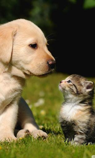 猫と犬の壁紙