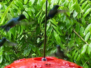 Photo: We saw 10 varieties of humming birds, the photo is blurred as they flap their wings soooo fast!