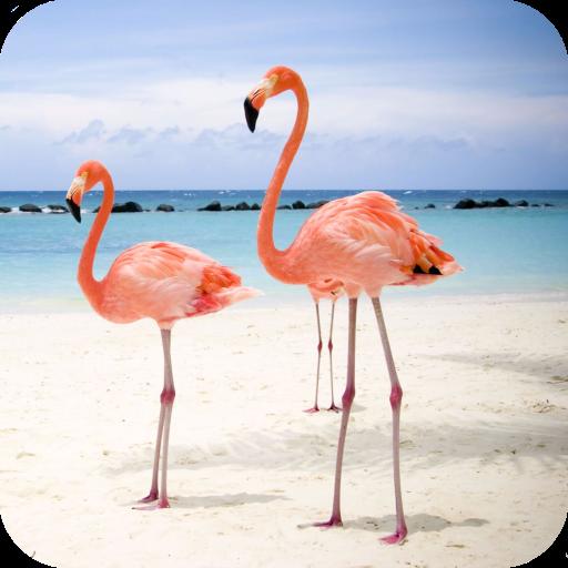 Flamingo Wallpaper Aplikasi Di Google Play