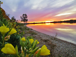 Photo: Gorgeous flaming sunset with yellow flowers at Eastwood Park in Dayton, Ohio.