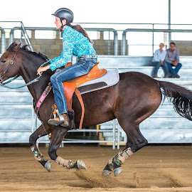 Hover Horse by Sarah Sullivan - Sports & Fitness Other Sports ( #dalby, #sarahsullivanphotography, #barrelracing, #qbra )