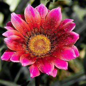 Flower with water drop. by Debasish Naskar - Nature Up Close Flowers - 2011-2013