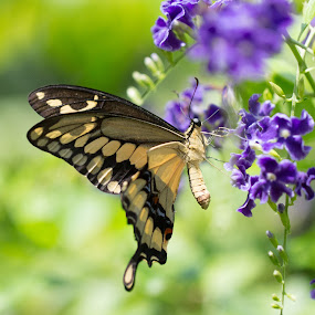 Butterfly on Flower by Greg Bracco - Animals Insects & Spiders ( butterflies, greg bracco, aruba, the butterfly farm, greg bracco photography,  )