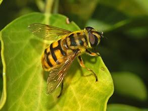 Photo: Beauty of Flies