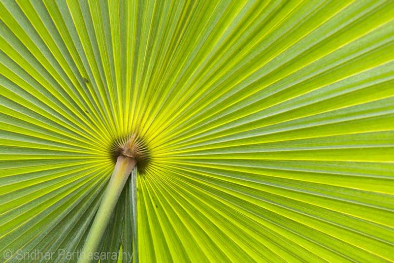 Photo: A palm leaf ...