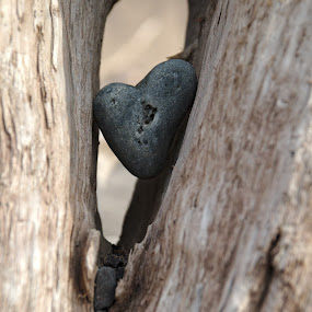 Heart of stone by Benjamin Howen III - Nature Up Close Rock & Stone ( love, warmth, wood, heart, stone )
