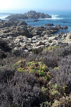 Photo: Weeds, Rocks and Sea - 17-Mile Drive, Pebble Beach, CA