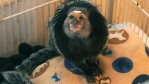 Serious Monkey Business thumbnail