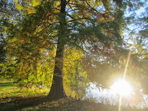 Photo: Setting sun reflected in the pond and through a tree at Eastwood Park in Dayton, Ohio.