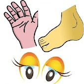 Body Parts Flashcards V2 - Android Apps on Google Play