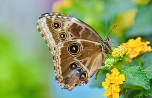 Effetto Farfalla  di emidesa