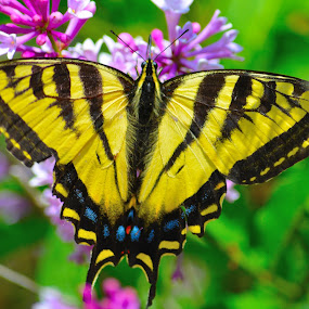 Butterfly Love by Lyn Daniels - Animals Insects & Spiders (  )