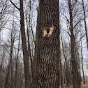 wood pecker hole