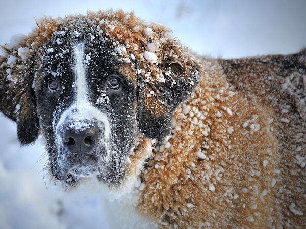Winter Care Tips For Your Four-Legged Friend