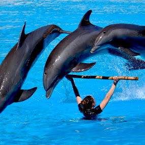 Dolphins in Loro Park Tenerife  by Richard Lawes - Novices Only Wildlife