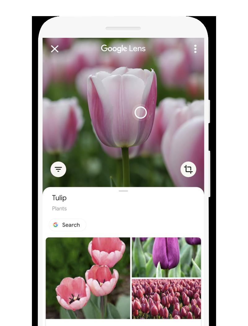 Ahora puedes realizar traducciones en Google Lens para Android sin necesidad de Internet