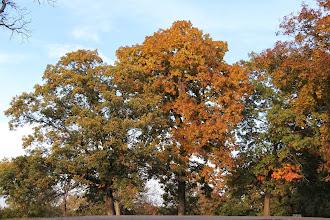 Photo: Oak trees at Siloam Mountain Park.