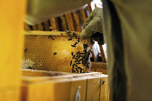 You can invest in you own beehive through the Impact Farming app.