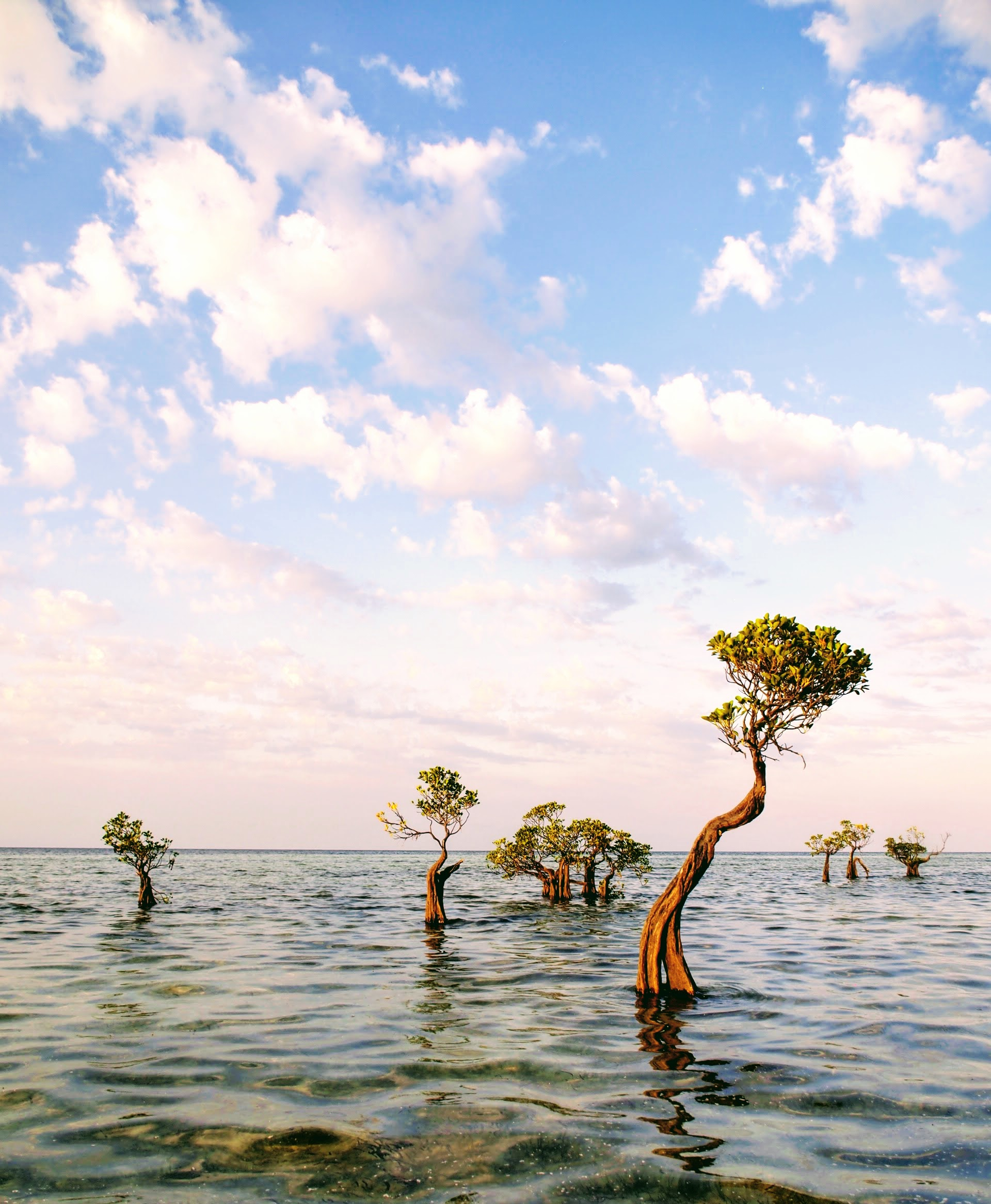 Dancing mangroves at Walakiri Beach