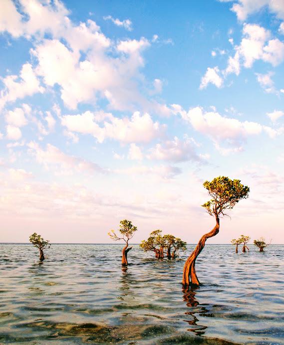 Dancing mangroves at Walakiri Beach