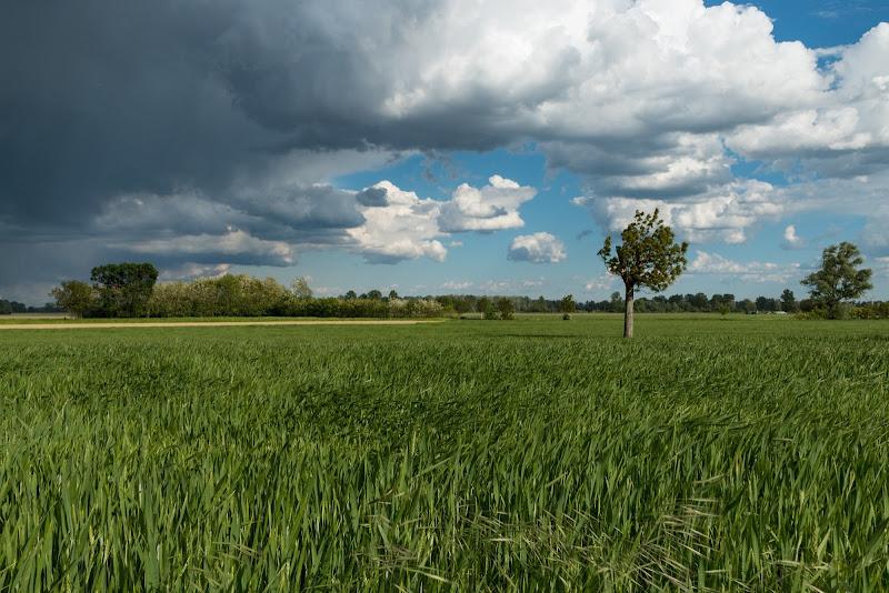 E il grano matura, cullato dal vento... di Davide_79