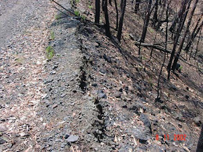 Photo: Australia: This vetiver hedgerow was planted along side a railway line. The nearby woods caught fire, as did the vetiver. (dark black line in center) - Paul Truong