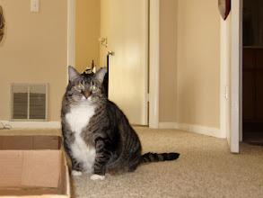 Photo: Day 12-Felix The Cat