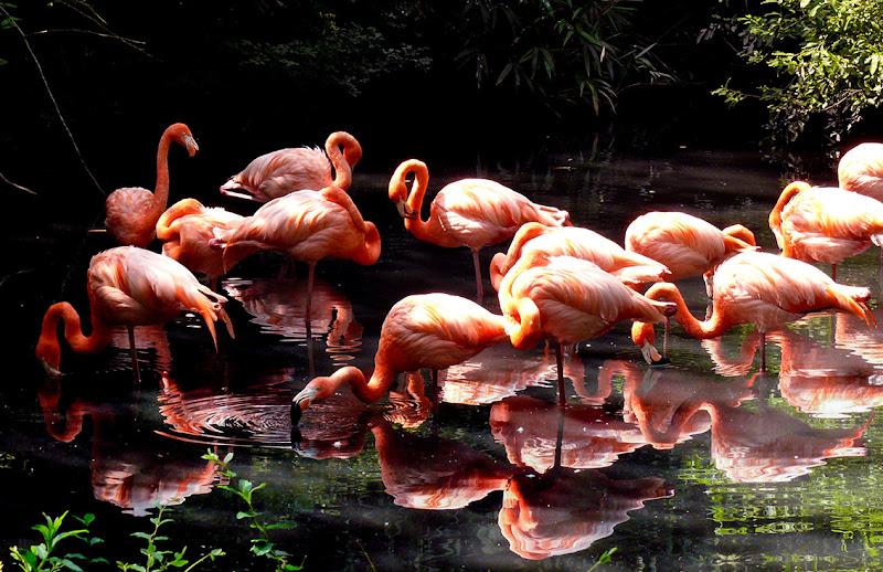 fenicotteri rosa di FANTASI-47