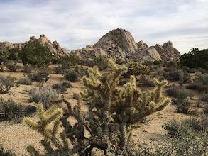 Photo: Cactus and granite, Mojave National Preserve,iPhone 5S.