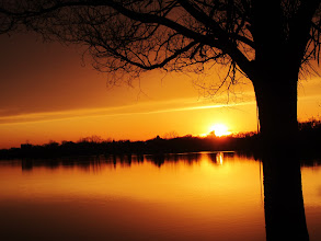 Photo: Silhouette of a tree against a bright lake sunset at Eastwood Park in Dayton, Ohio.