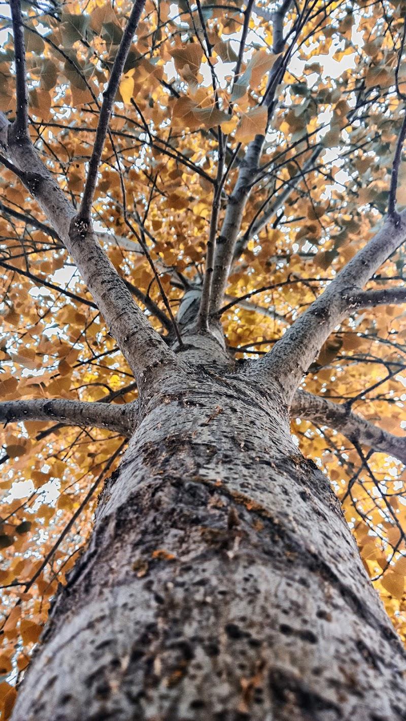 Tree di Domenico Cippitelli