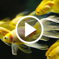 Download Fish Video Live Wallpaper Free For Android Fish Video Live Wallpaper Apk Download Steprimo Com