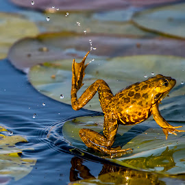 by Stanley P. - Animals Amphibians (  )