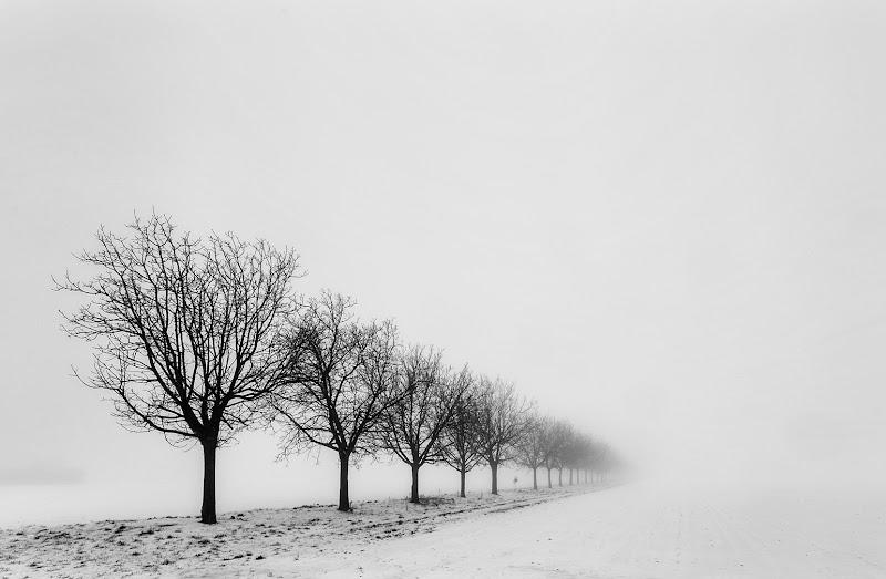 Fra neve e nebbia di CarloBassi