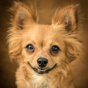 Dolly by Myra Brizendine Wilson - Animals - Dogs Portraits ( canine, dolly, pet, dog,  )